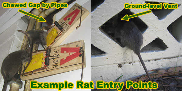 How Do I Get Rid Of Rats In My Home Small House Interior