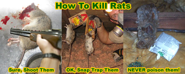 How To Kill Mice In The Attic