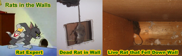 How to get mice out of a wall