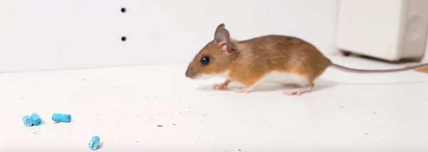Do mothballs or ammonia help repel mice ccuart Images